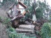 Victoria home after windstorm